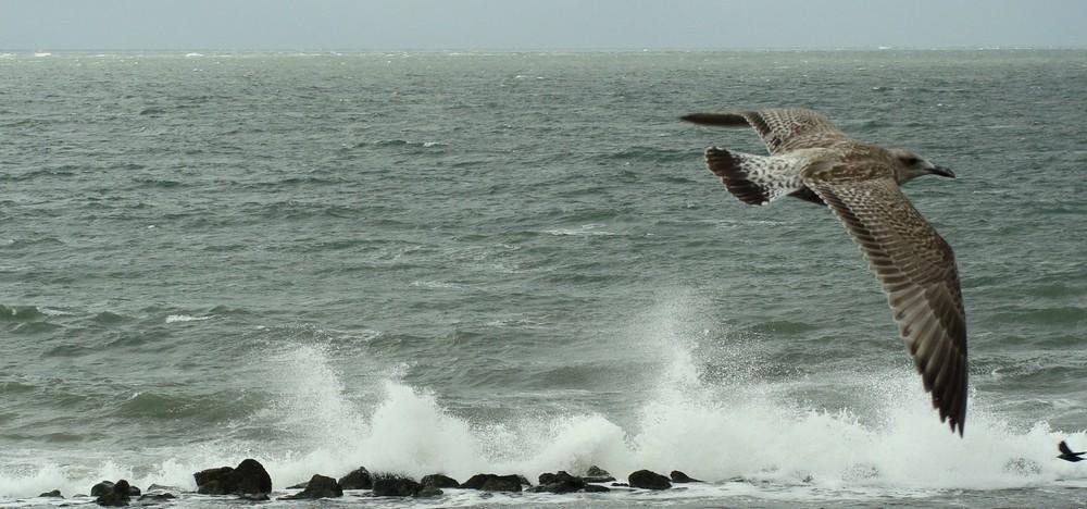 Da tobt ein Sturm, dass jedes Meer in Wellen bricht...