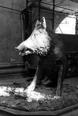 Da wird doch das Schwein in der Pfanne wild...