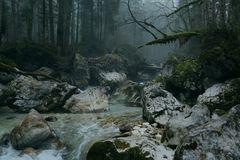 Da wo die Waldgeister hausen