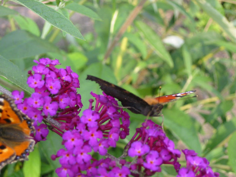 Da wollte der Schmetterling gerade starten...