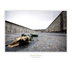 Dachau #01