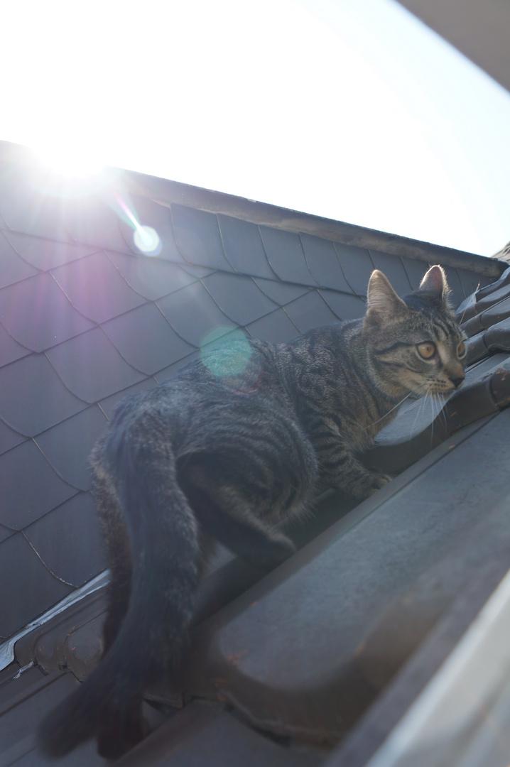 Dachspaziergang