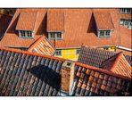 Dächer + Fenster