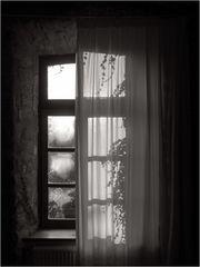 Dämmergrün vor meinem Fenster