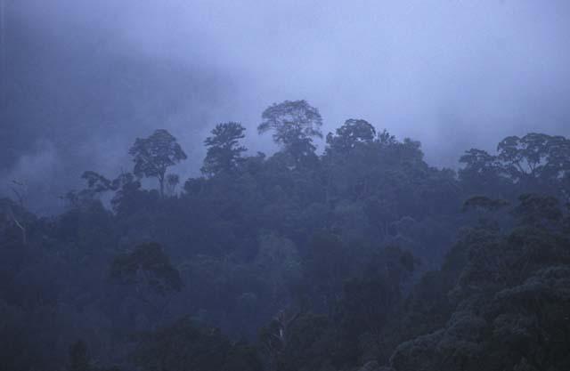 Dämmerung im Regenwald