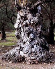Dämonenbaum