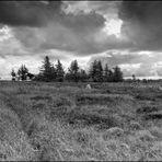 Dänische Heide