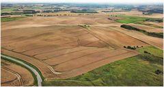dänische Kornfelder