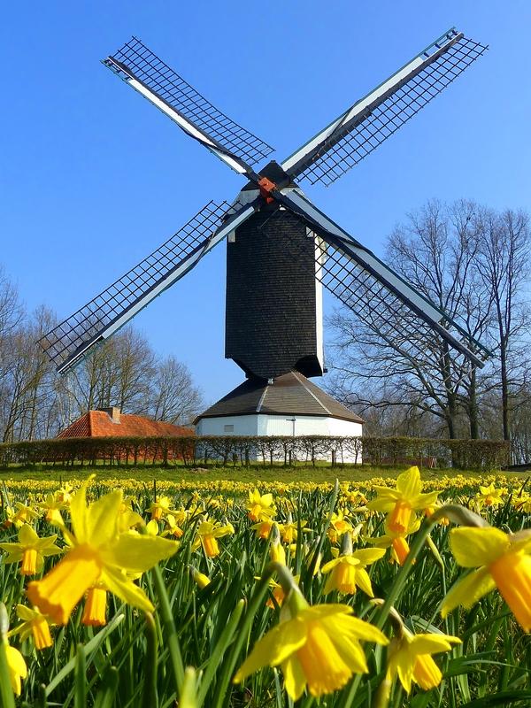 'Daffodil mill'