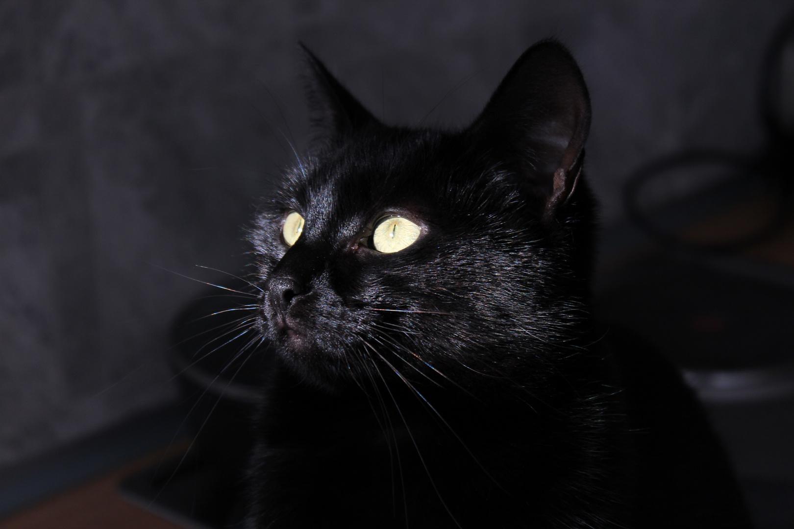 """Daher der Begriff """"Katzenaugen""""..."""