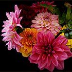 """"""" Dahlien in prachtvollen Farben """""""