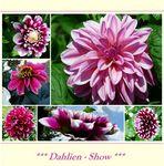 * Dahlien-Show *