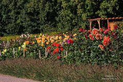 Dahliengarten (Hamburg-Altona) / 01.09.20 / 8