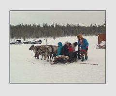 Dai Saami..un giro in slitta trainata da renne..