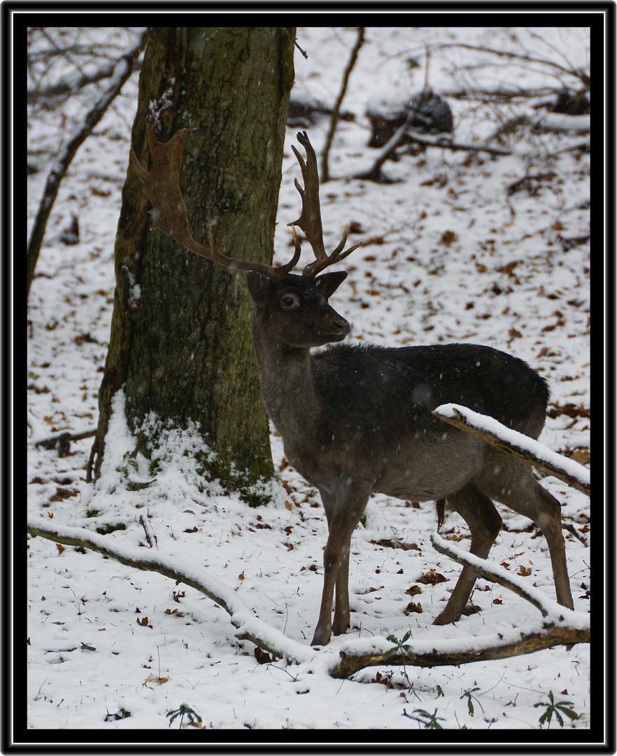 dain sous la neige.