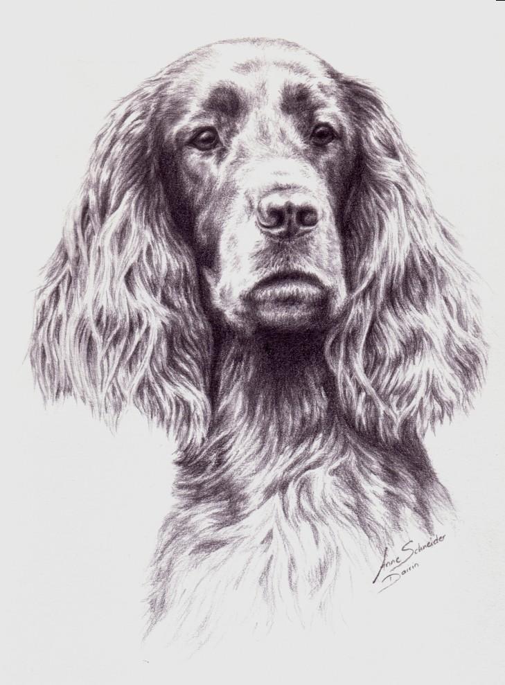 Dairin Portrait