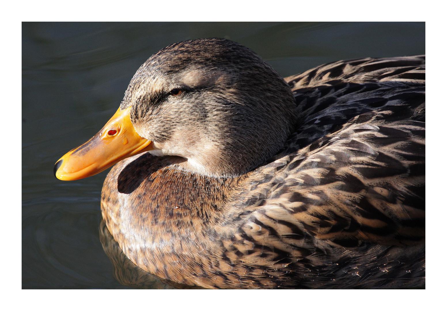 daisy duck...