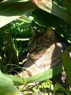 Daisy im Garten