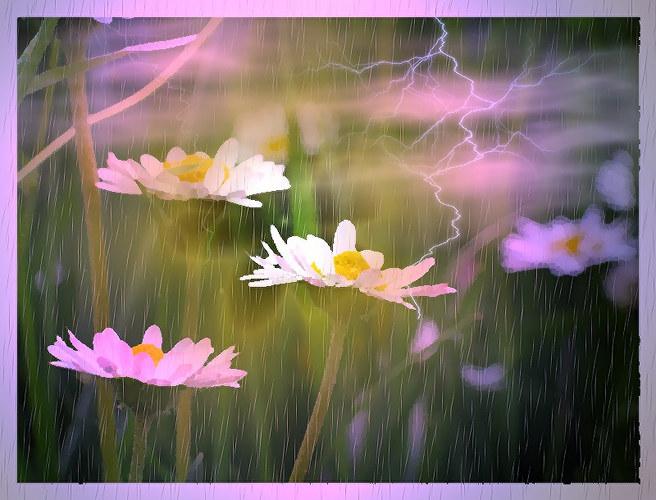 daisy weather