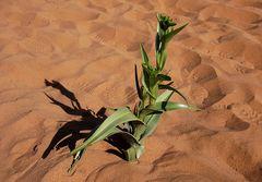 dal deserto del Namib
