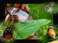 Dalla casa delle farfalle