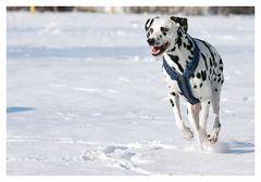 Dalmatiner Lucky Luke