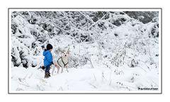 [Dalmatiner und Herrchen] - Winterwonderland