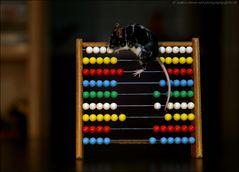 Dalmatiner, unsere Rechenmaus :-)