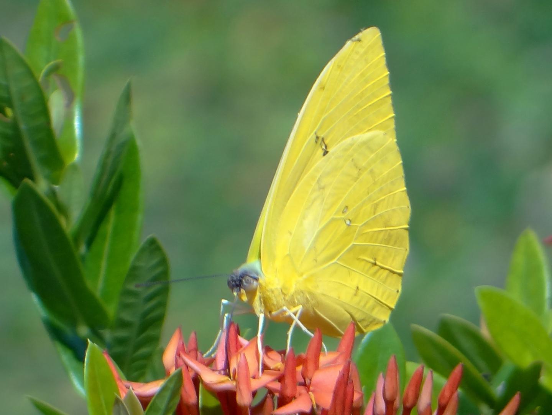 Dama en amarillo....