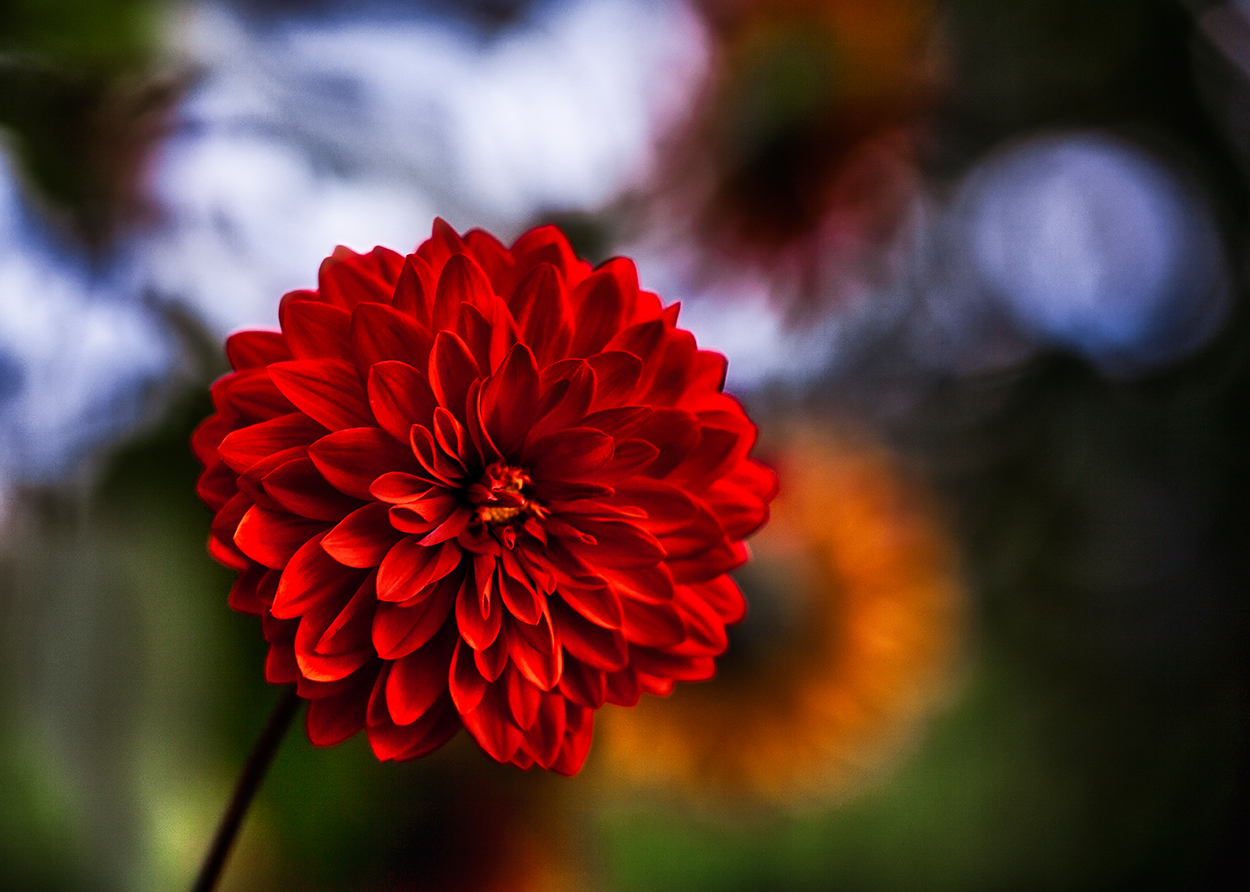 ''Dame en rouge'' ;o)