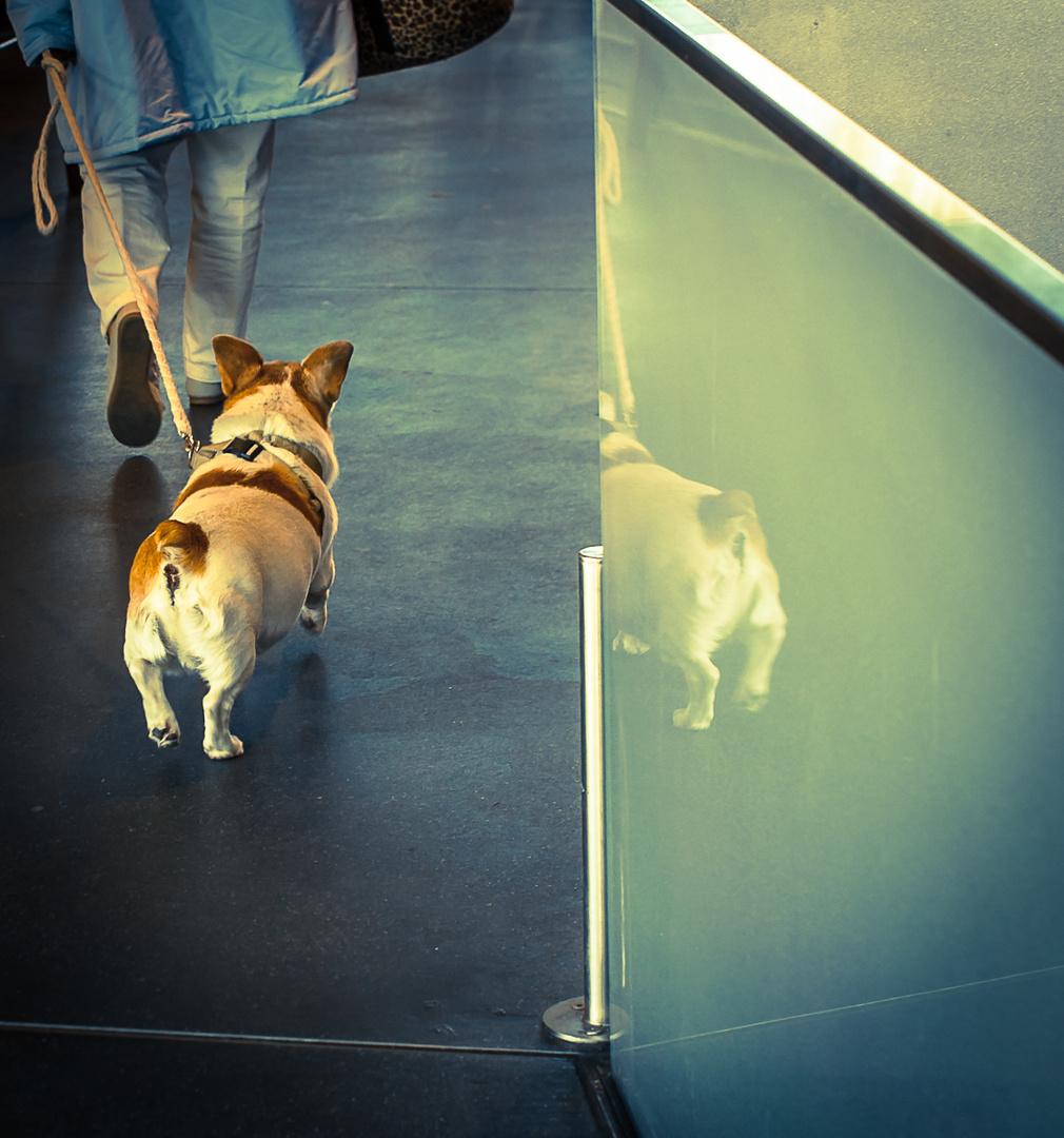 dame mit hund [1]
