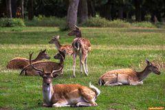 Damhirsch und Familie im Wildpark Silz