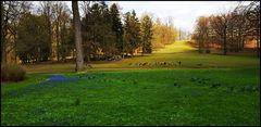 Damhirschgehege im Gräflichem Park Bad Driburg