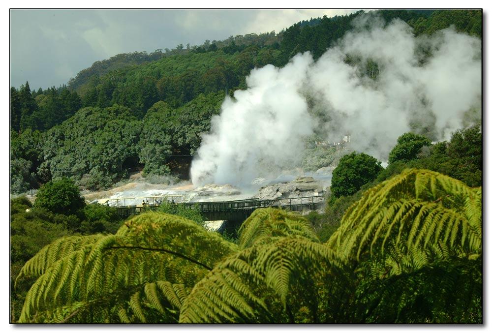 Dampf im Wald von Neuseeland