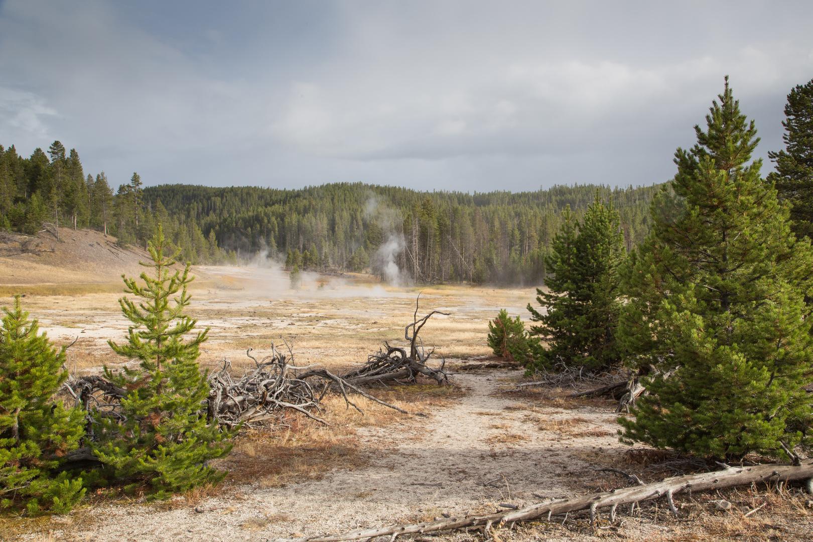 Dampfende Erde im Yellowstone National Park