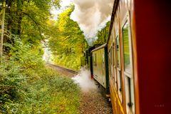 Dampfzug im Herbstwald