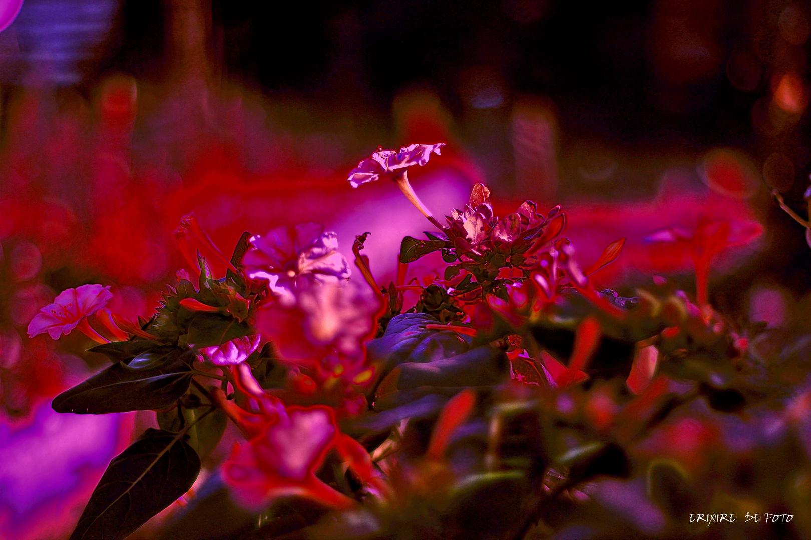 dance flower