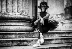 ......dance monkey......