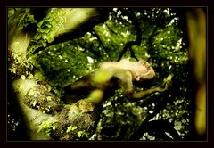 [Dance of the tree]