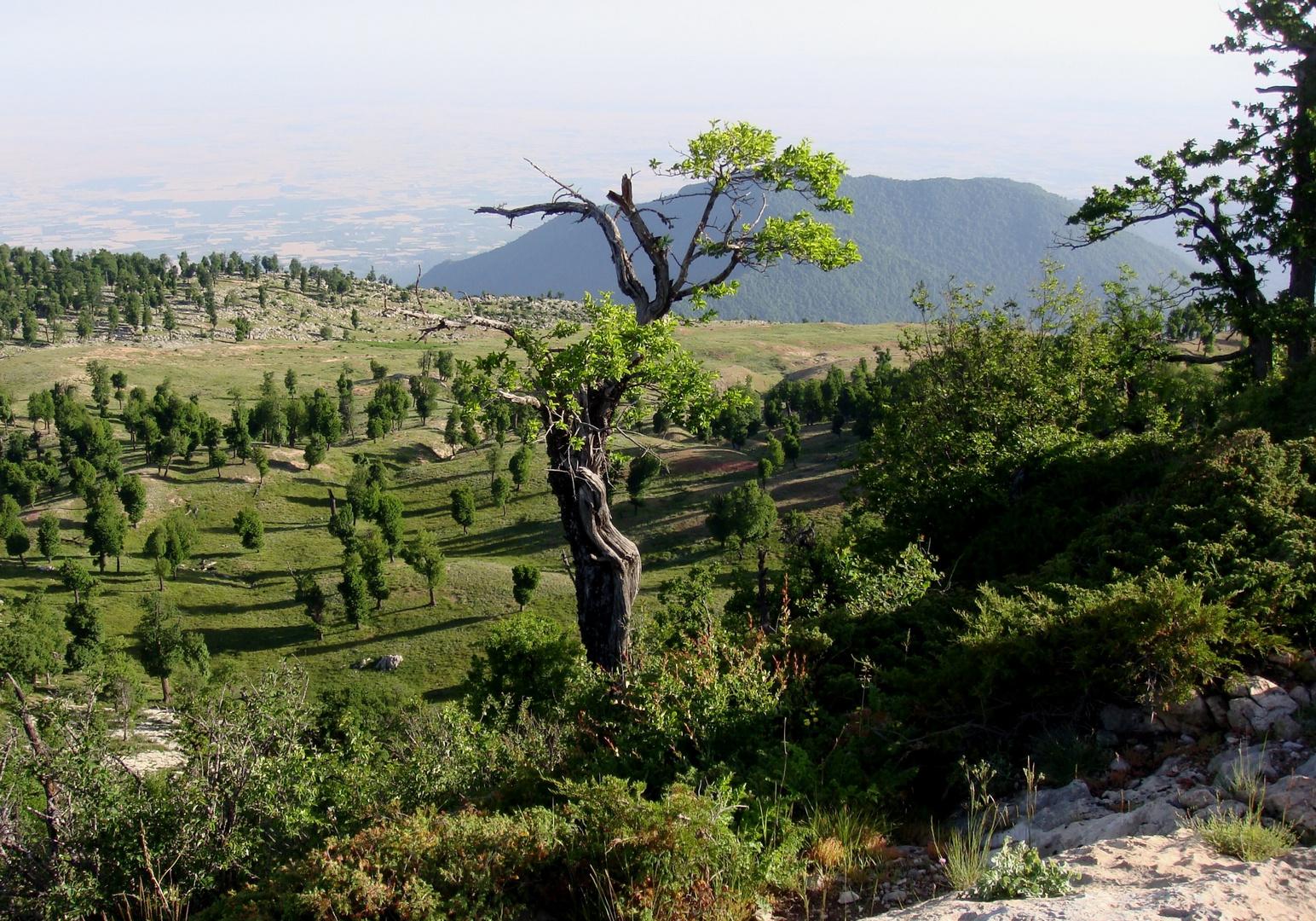 Dancer tree on top!