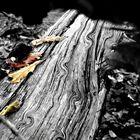 Dancing On Dead Wood