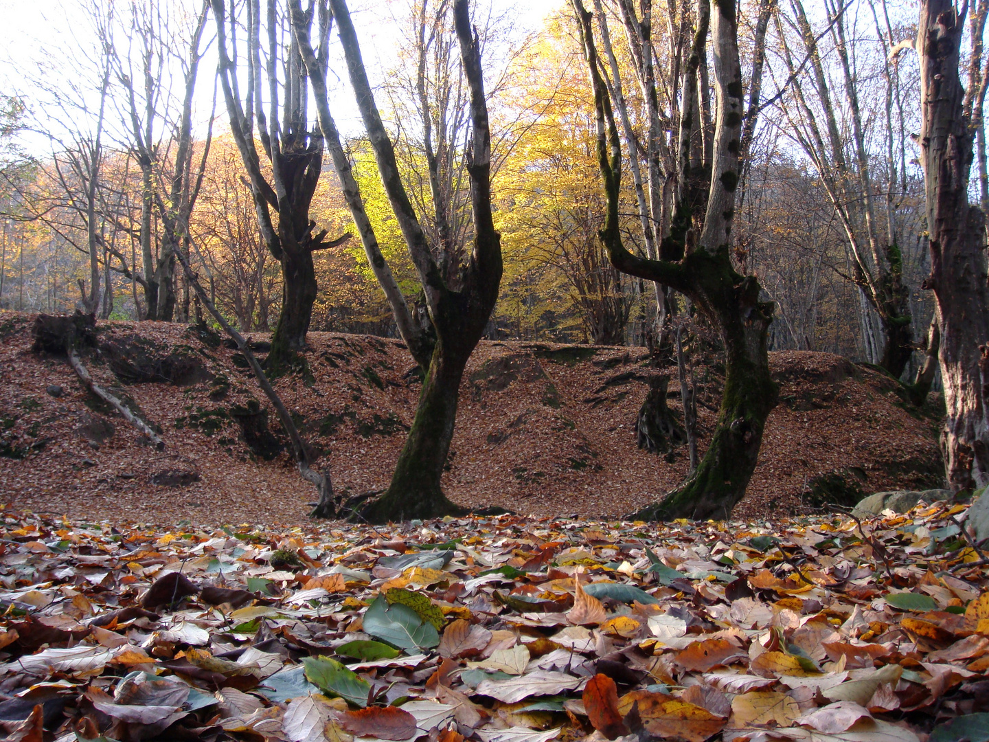 Dancing trees celebrate the Fall:)
