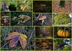Danke lieber Herbst.....