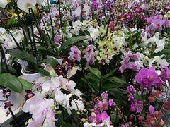Danke, mit Orchideen...