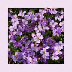 dann eben lila...