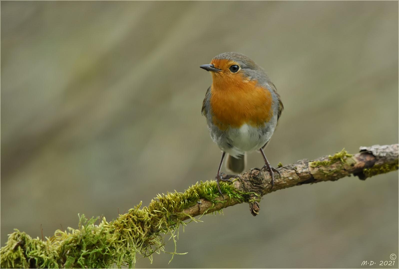 Dann saß er plötzlich da,der kleine Robin...