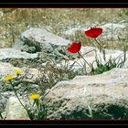 dans la campagne jordanienne