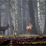 """ Dans la forêt embrumée """