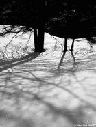 Dans la forêt hivernale / Im Winterwald