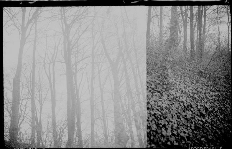 dans la forêt I